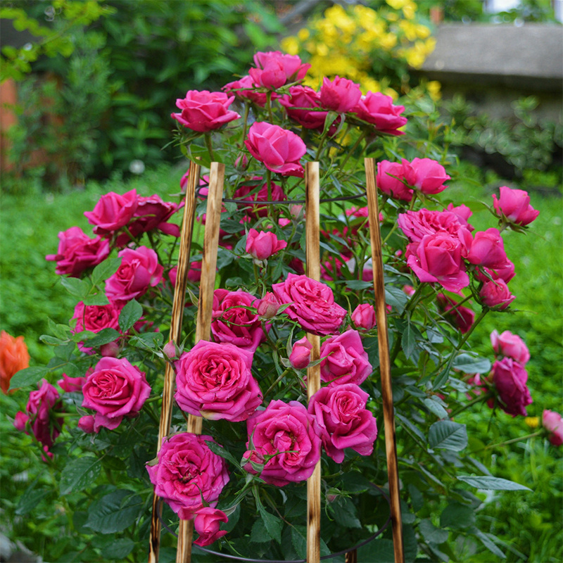 Цветочница садовая малая